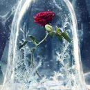 Rosa de la película de La Bella y la Besitia